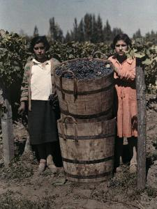 Two Women Stand with Barrels of Grapes Used to Make Wine by Maynard Owen Williams