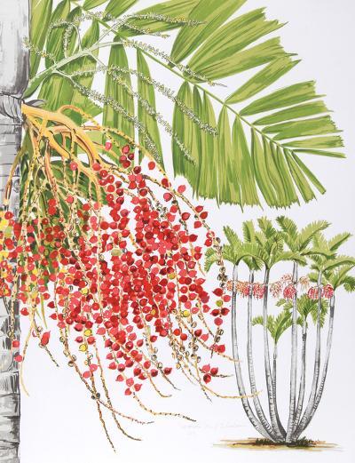 Mcarthur Palm-Marion Sheehan-Collectable Print