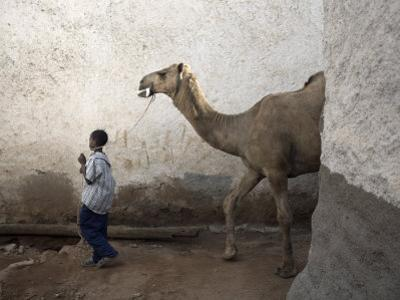Boy Walks His Camel Through One of the 368 Alleyways Contained Within the City of Harar, Ethiopia by Mcconnell Andrew