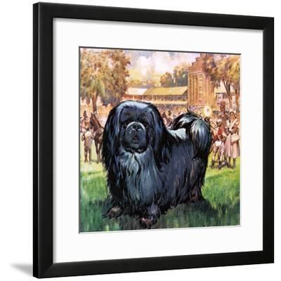 Black Knight. the Pekinese Dog Owned by Artist Sir Alfred Munnings.