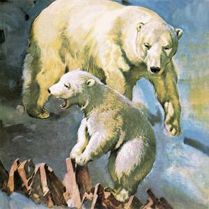 Polar Bear by McConnell
