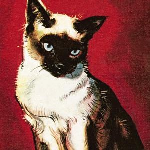 Siamese Cat by McConnell