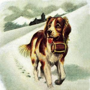St Bernard Dog by McConnell