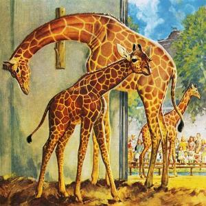 Virginia the Giraffe by McConnell