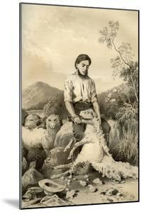 Sheep Shearing, 1879 by McFarlane and Erskine