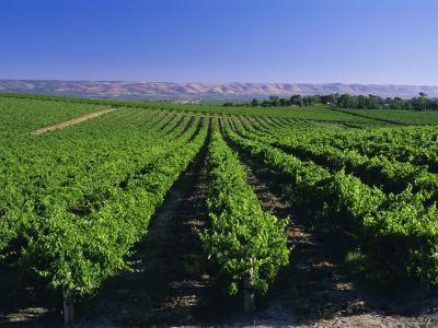 Mclaren Vale-Oliverhill Wines Vineyards, South Australia, Australia-Neale Clarke-Photographic Print