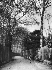 Autumn Time in Holland Walk, London, 1926-1927 by McLeish