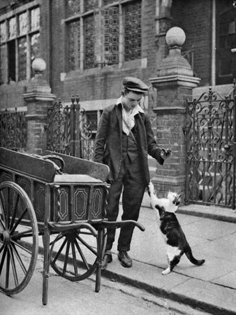 Cat's Meat Man, London, 1926-1927