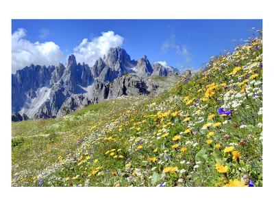Meadow at Sexten Dolomites Nature Park, Province of Bolzano, South Tyrol, Italy--Art Print