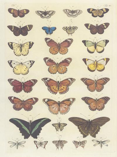 Meadow Butterflies-Maria Mendez-Giclee Print