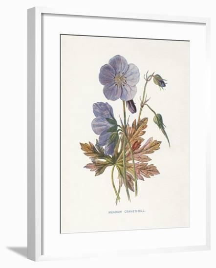 Meadow Cranes-Bill-Gwendolyn Babbitt-Framed Art Print