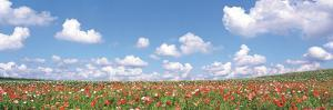 Meadow Flowers with Cloudy Sky in Background