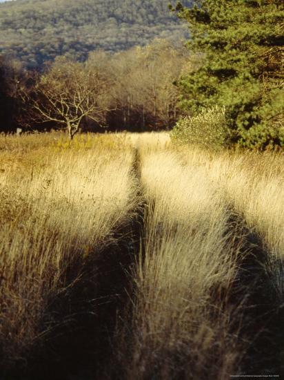Meadow Grass in the Cranberry Glades Botanical Area in Autumn-Raymond Gehman-Photographic Print