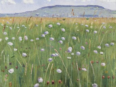 Meadow of Flowers, about 1901-Ferdinand Hodler-Giclee Print