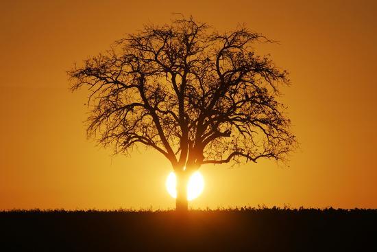 Meadow, Tree, Bald, Silhouette, Sunset Landscape-Ronald Wittek-Photographic Print