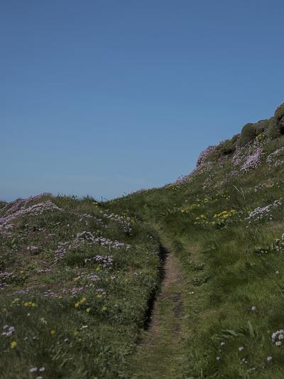 Meadow, Wild Flowers, Grass, Coast, England-Andrea Haase-Photographic Print