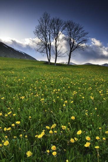 Meadow with Yellow Dandelions, Gap, France-Keith Ladzinski-Photographic Print