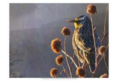 Meadowlark-Chris Vest-Art Print