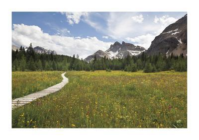 Meander The Meadow-Donald Paulson-Giclee Print