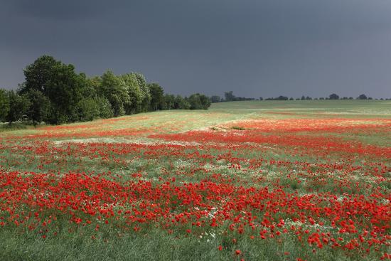 Mecklenburg-Western Pomerania, Landscape, Poppy Field, Stormy Atmosphere-Catharina Lux-Photographic Print