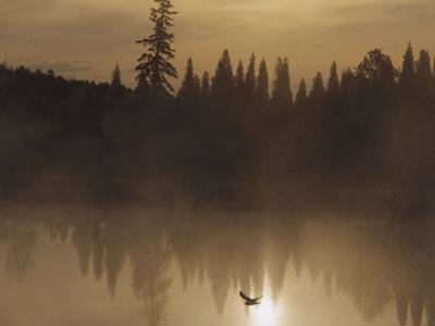 A Bird Flies Low over Fog-Shrouded Lake Superior