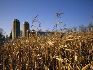 A View of Corn Fields with Silos in the Distance by Medford Taylor