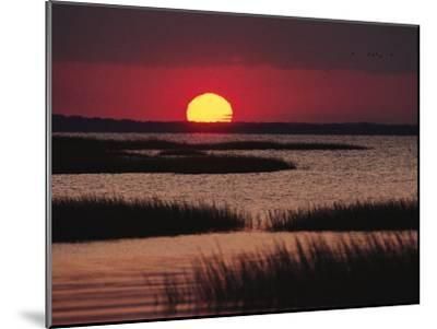Sunset over Chincoteague Island Marsh, Virginia by Medford Taylor