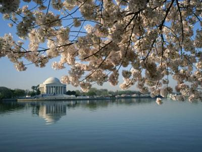 View of Cherry Blossoms and Lincoln Memorial at the Tidal Basin by Medford Taylor