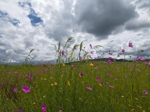 Windswept Field of Wildflowers by Medford Taylor