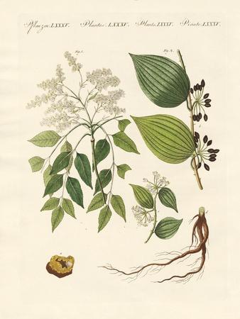https://imgc.artprintimages.com/img/print/medical-plants_u-l-pvqziq0.jpg?p=0
