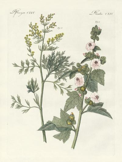 Medical Plants--Giclee Print