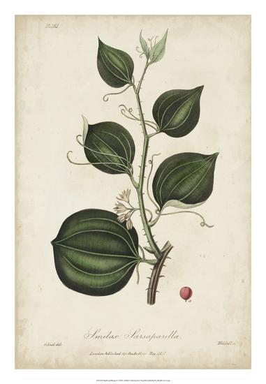 Medicinal Botany I-Churchill-Giclee Print