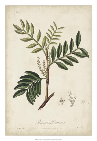 Medicinal Botany II-Churchill-Giclee Print