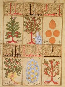 """Medicinal Plants for the Theriac, from """"Treatise of Theriac"""""""