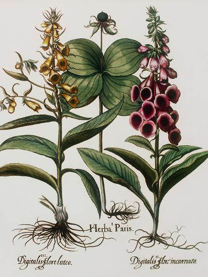 Medicinal Plants-Georgette Douwma-Photographic Print