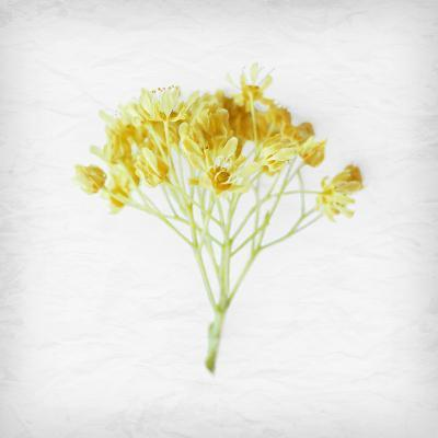 Meditative Yellow-Daniela Savone-Photographic Print