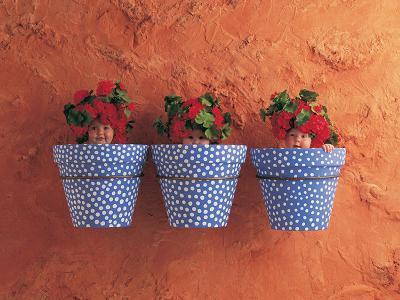 Mediterranean Pots-Anne Geddes-Art Print