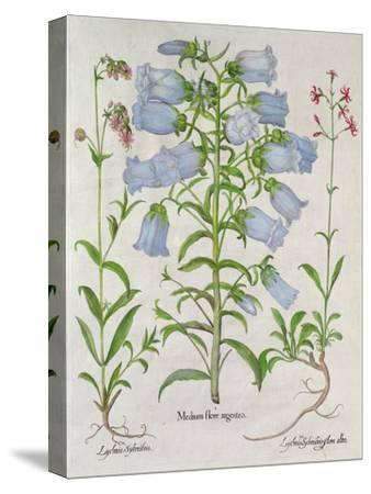 Medium Flore Argenteo