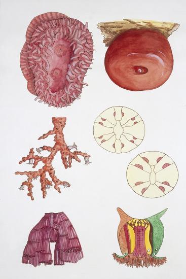 Medium Group of Red Coral (Corallium)--Giclee Print