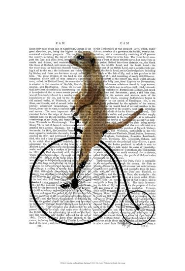Meerkat on Black Penny Farthing-Fab Funky-Art Print