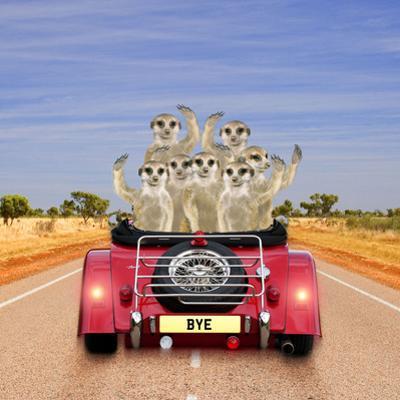 Meerkats in Car Waving