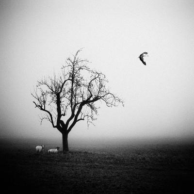 Meeting in the Morning Mist-Holger Droste-Photographic Print