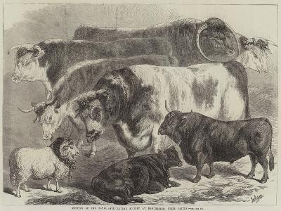 Meeting of the Royal Agricultural Society at Manchester, Prize Cattle-Samuel John Carter-Giclee Print