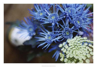 Drummond Blue