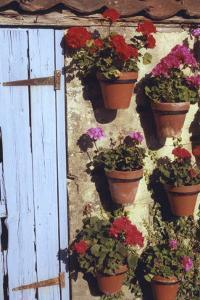 Geranium Wall by Meg Mccomb
