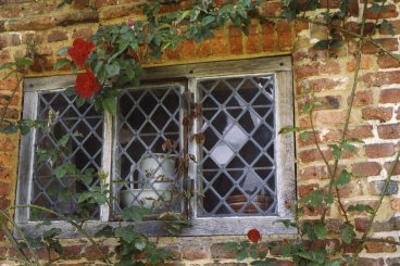 Pitcher Window