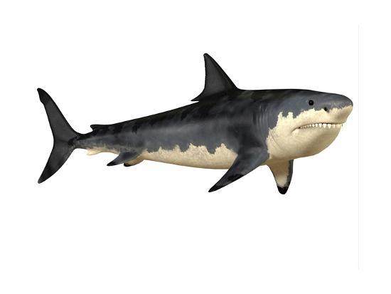 Megalodon Shark, an Enormous Predator from the Cenozoic Era--Art Print