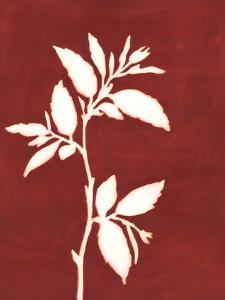 Four Seasons Foliage III by Megan Meagher