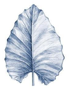 Indigo Tropical Leaves III by Megan Meagher