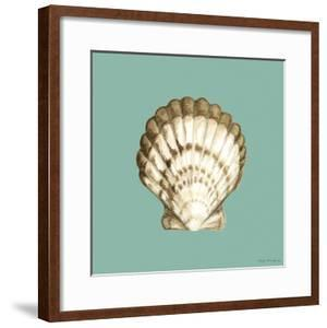 Shell on Aqua III by Megan Meagher